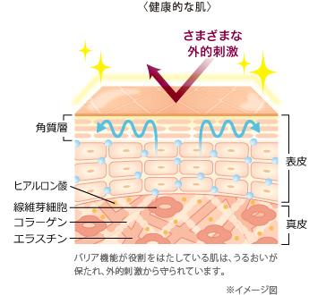 健康的な肌のイメージ 肌の美しさを司る角質層は、角質細胞と細胞間脂質で構成されています。そし..